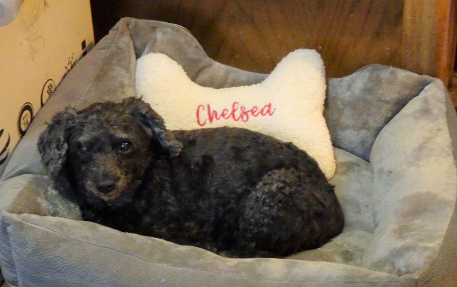 Chelsea_Obit